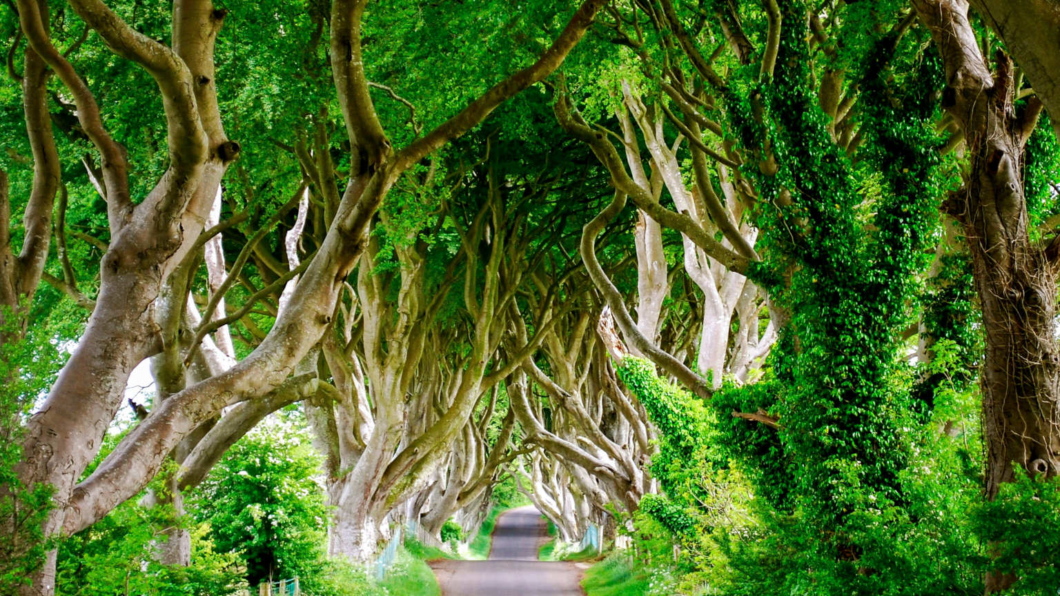 Ireland-Northern-Ireland-Dark-Hedges-Beech-Trees-Path-Road-Sean-Graham-2014-DSC2208-Lg-RGB