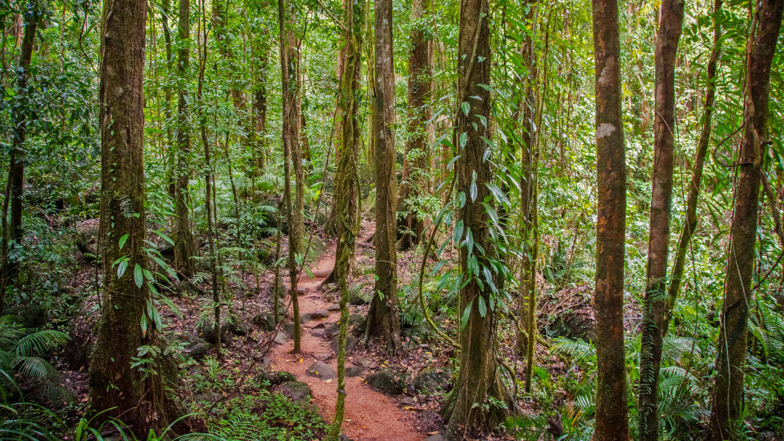 Daintree Rainforest interpretive walk.