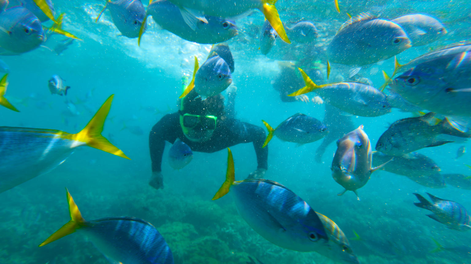 Australia-Whitsunday-Islands-Snorkelling-Fish-Traveller-Leo-Tamburri